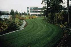 GeoBlock Porous Paver Fire Lane Microsoft Campus Bellevue WA